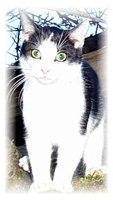 Katze Mizzi